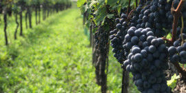 What is a Super Tuscan? Come find out Sept. 24 at Siena!